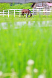 Paard in landbouwbedrijf Stock Foto
