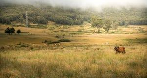 Paard in landbouwbedrijf royalty-vrije stock afbeeldingen