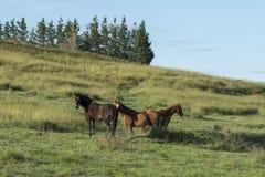 Paard in landbouwbedrijf, Lithgow Stock Foto's