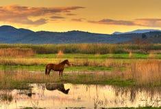 Paard in landschap Stock Fotografie