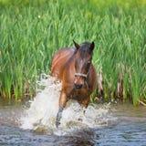 Paard in meer Stock Fotografie