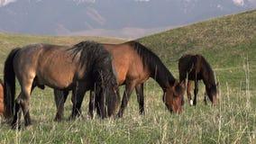 Paard, Merrie en Veulen stock video
