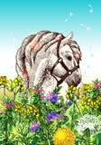 Paard met bloemen Stock Foto's