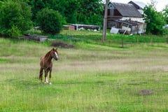 Paard met de ketting dichtbij het landbouwbedrijf Royalty-vrije Stock Foto