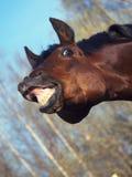 Paard met een betekenis van humeur Stock Afbeeldingen