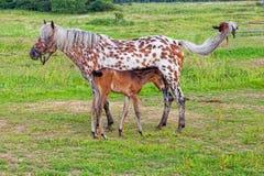 Paard met een veulen royalty-vrije stock afbeeldingen