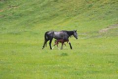 Paard met een veulen Stock Foto's