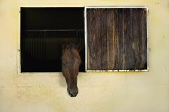 Paard met hoofd uit venster in stal Royalty-vrije Stock Afbeeldingen