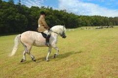 Paard met jockey bij dressuurtests stock afbeelding