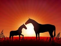 Paard met jong geitje op zonsondergangachtergrond Royalty-vrije Stock Foto
