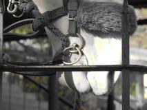 Paard met Noseband Stock Foto