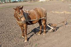 Paard met ploeg Royalty-vrije Stock Foto