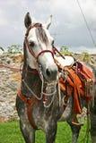 Paard met sadle royalty-vrije stock afbeelding