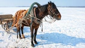 Paard met slee bij de bank van bevroren rivier stock video