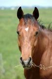 Paard met stok Royalty-vrije Stock Foto's