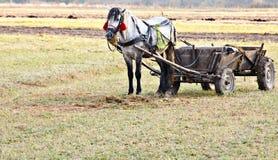 Paard met vervoer Stock Fotografie