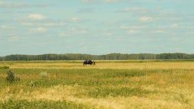 Paard met veulen op het gebied stock footage