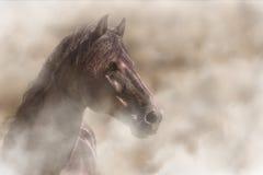 Paard in mist stock foto's