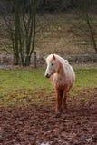 Paard in modder Royalty-vrije Stock Foto