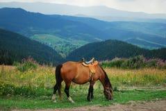 Paard in mooi landschap Royalty-vrije Stock Foto