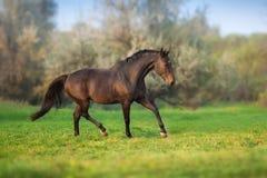 Paard in motie royalty-vrije stock foto's