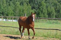Paard in motieportret stock fotografie