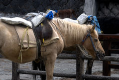 Paard, Mt. Fuji, Japan Royalty-vrije Stock Afbeelding