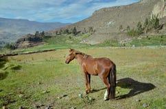 Paard in natuurlijk landschap Royalty-vrije Stock Afbeelding