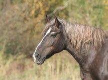 Paard op aard stock foto's