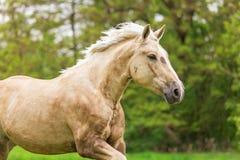 Paard op aard Stock Fotografie