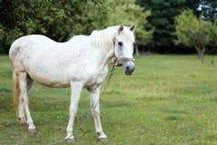 Paard op aard Paardlandbouwbedrijf, schone het paardstallen van Nice Royalty-vrije Stock Afbeeldingen