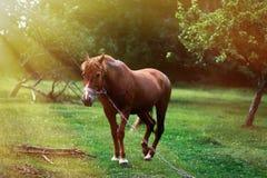 Paard op aard Paardlandbouwbedrijf, schone het paardstallen van Nice Stock Fotografie