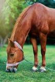 Paard op aard Paardlandbouwbedrijf, schone het paardstallen van Nice Stock Afbeeldingen