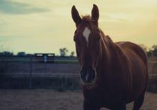 Paard op aard Portret van een paard, het bruine paard lopen royalty-vrije stock foto