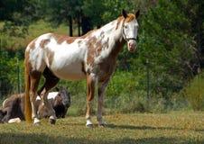 Paard op boerderij Royalty-vrije Stock Afbeeldingen
