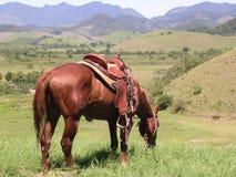Paard op de gebieden Stock Afbeelding