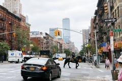 Paard op de straat van New York Royalty-vrije Stock Foto's