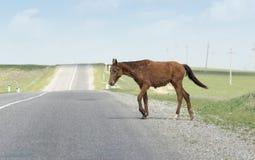 Paard op de weg royalty-vrije stock afbeeldingen