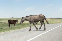 Paard op de weg stock fotografie