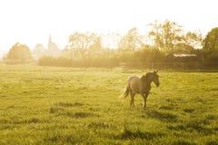 Paard op de weide royalty-vrije stock foto