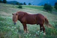Paard op de weide Stock Foto's