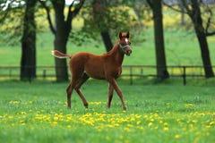 Paard op de weide Royalty-vrije Stock Foto's