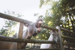 Paard op een boerderij royalty-vrije stock fotografie