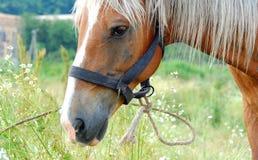 Paard op een de zomerweiland Royalty-vrije Stock Foto