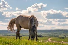 Paard op een de zomerweiland royalty-vrije stock afbeeldingen