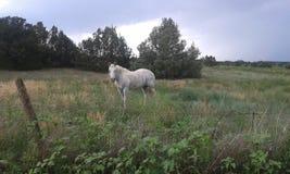 Paard op een Gebied Stock Fotografie