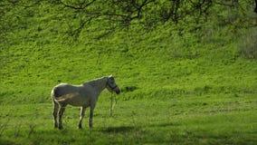 Paard op een gebied, landschap stock video