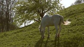 Paard op een gebied, landschap stock videobeelden