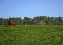 Paard op een heuvel Stock Fotografie