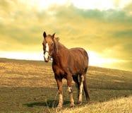 Paard op een heuvel Royalty-vrije Stock Foto's